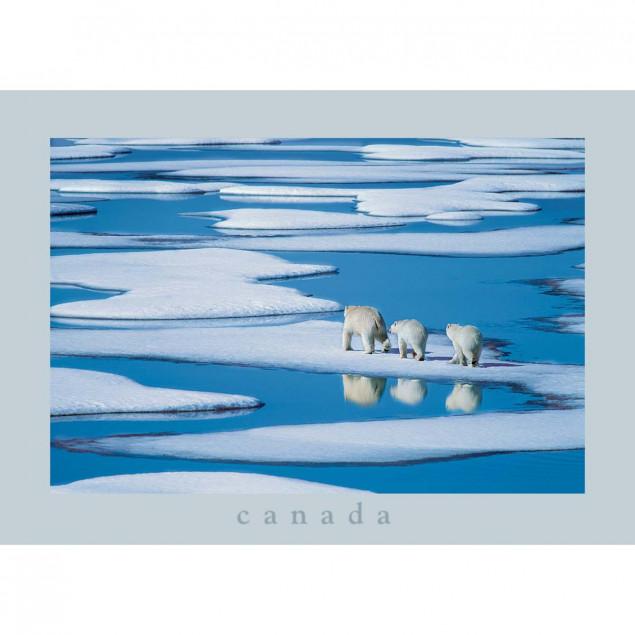 Famille d'ours polaires, Passage du Nord-Ouest, Ca