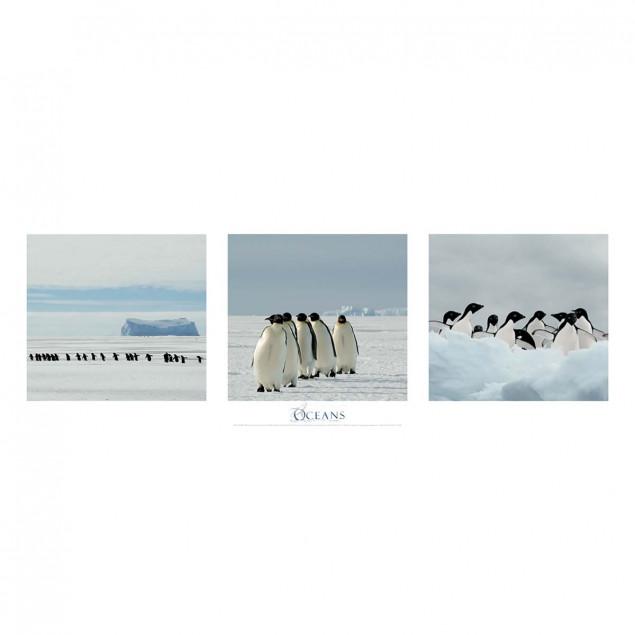 Emperor Penguins and Adelie Penguins