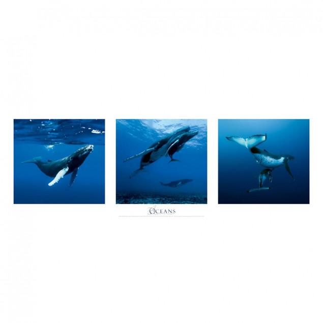 Baleines à bosse, Polynésie française