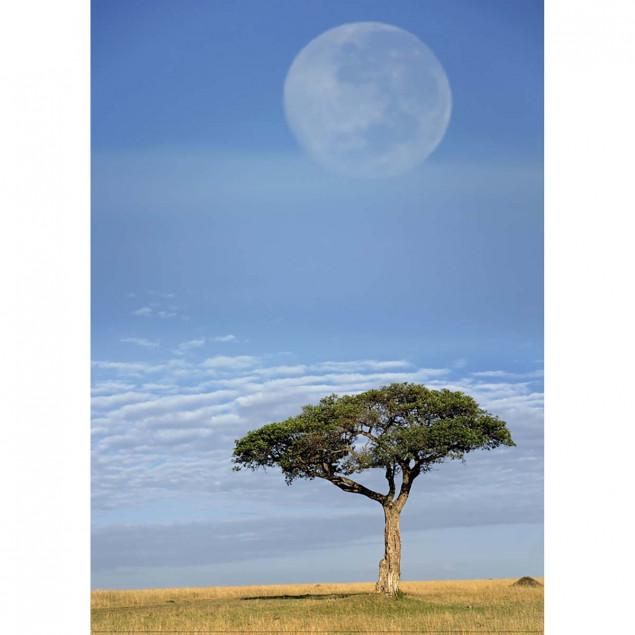 Pleine lune, Masai Mara, Kenya