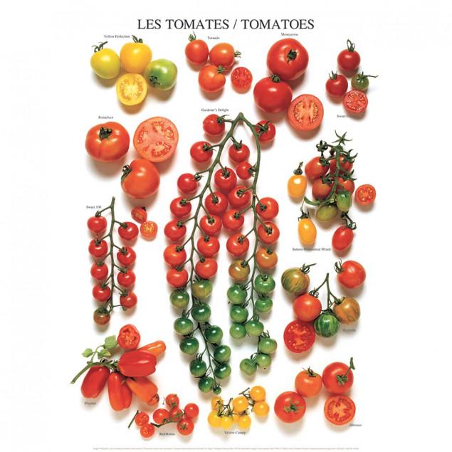 Les tomates (variétés américaines)