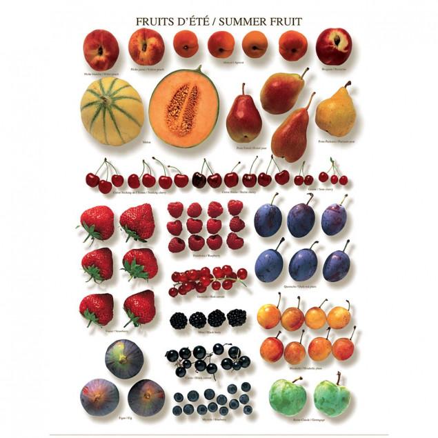 Summer Fruit poster - 40 x 50