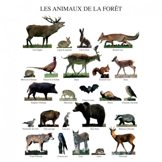Affiche Les animaux de la fôret - 40x50cm