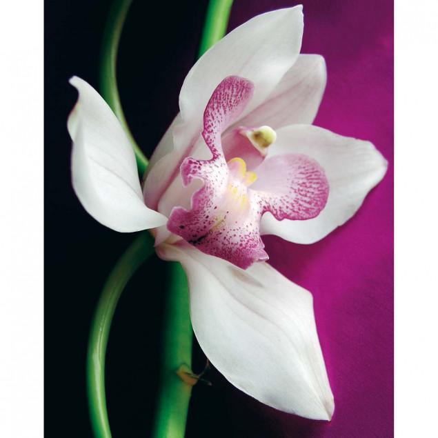 Orchid poster- A. VUILLON, 40 x 50 cm