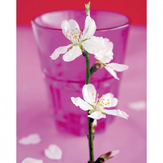 Almond Tree Blossom poster - A. VUILLON, 40 x 50 c
