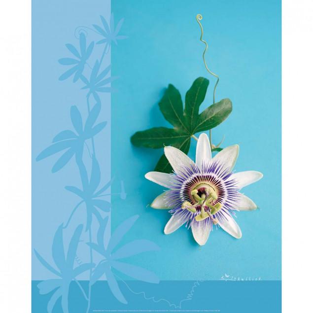 Passion Flower poster - A. VUILLON, 40 x 50 cm