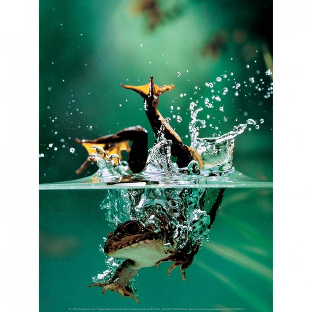 Frog under Water