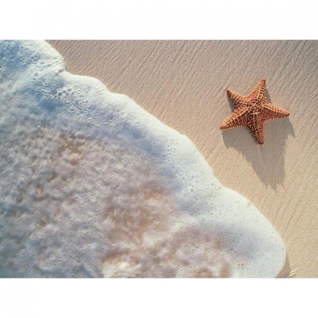 Affiche Etoile de mer - 30x40cm