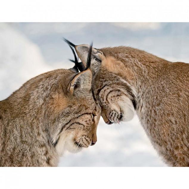 Deux lynx