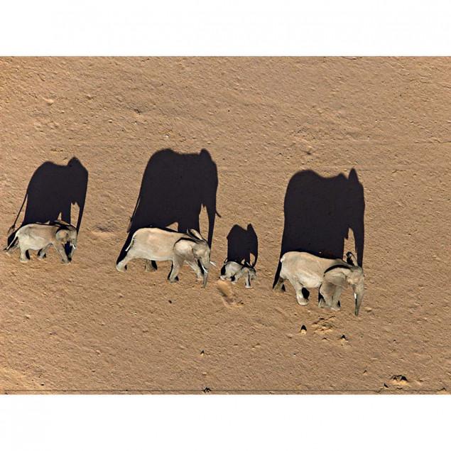 Elephants in Damaraland District, Namibia