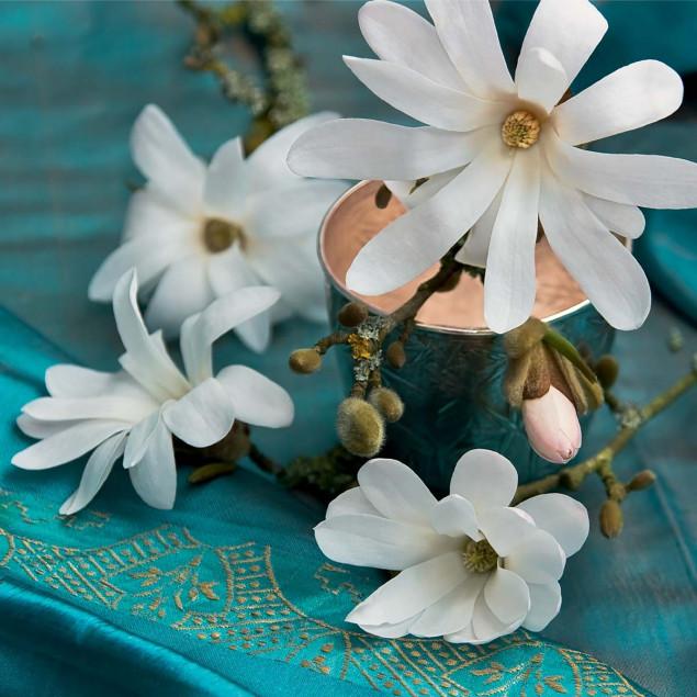 Magnolia and turquoise