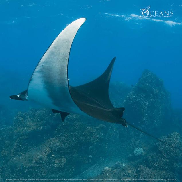 Manta ray, Socorro Islands, Mexico