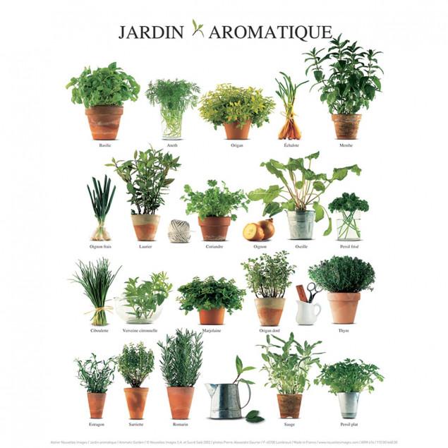 Affiche Jardin aromatique - 24x30cm