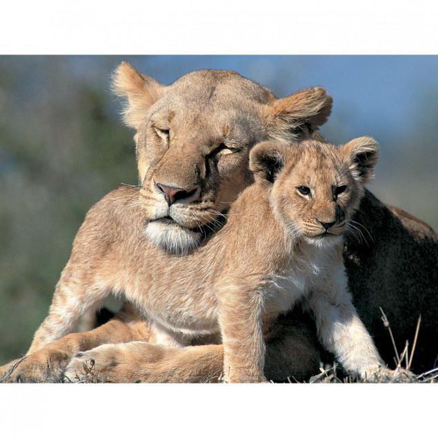 Lioness with Cub, Masai Mara Natural Reserve, Keny