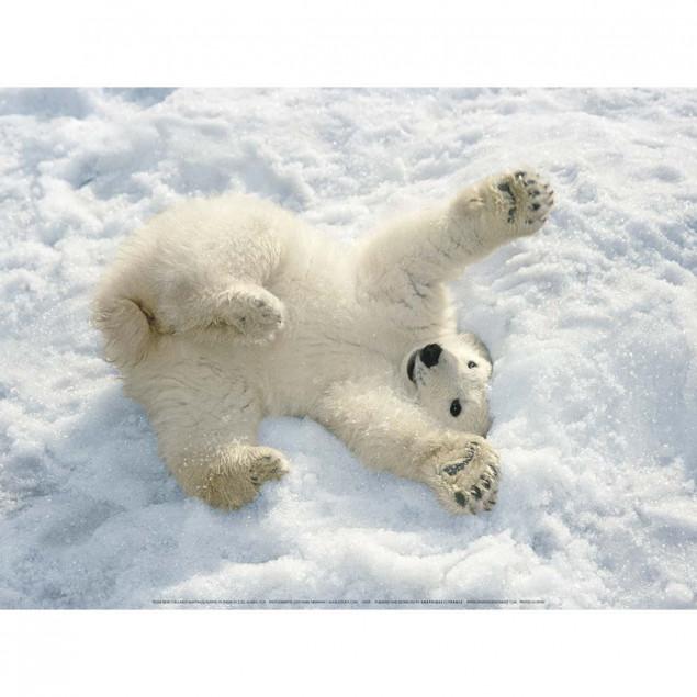 Polar Bear Cub poster, Alaska by Mark Newman - 30