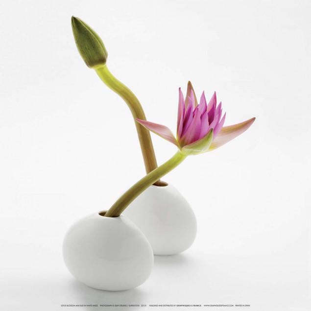 Fleur et bourgeon de lotus