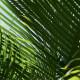 Palm trees, Dominican Republic, Punta Cana