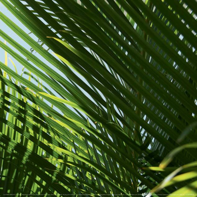 Palmiers, République dominicaine, Punta Cana