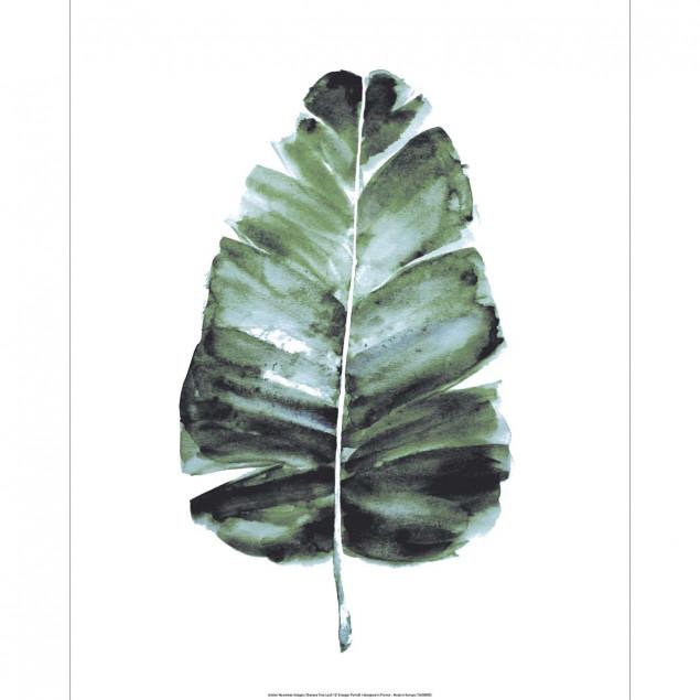 Affiche Feuille de Bananier aquarelle - 40X50cm