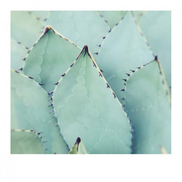 Carte Pola succulente 2