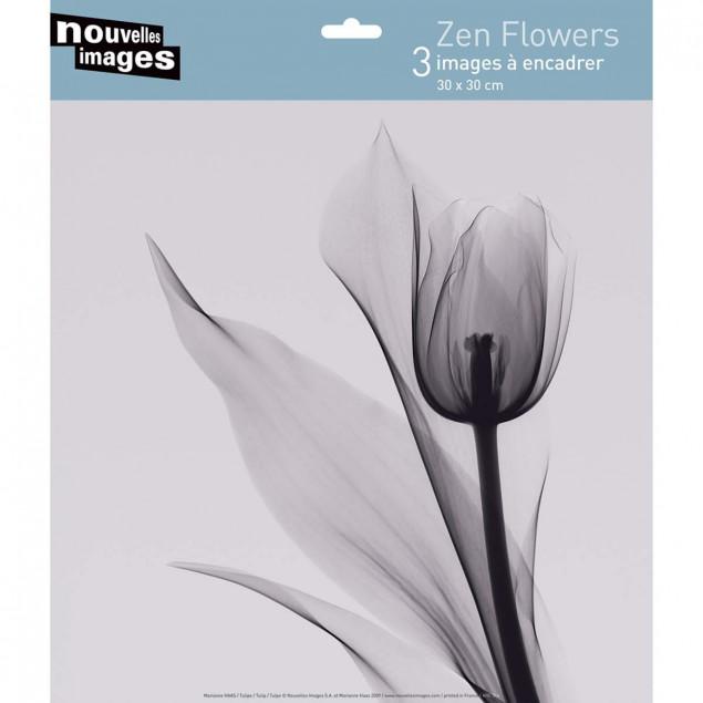 Zen Flowers, Marianne Haas - 30 x 30 cm
