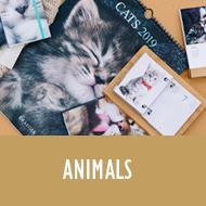 animaux_1.jpg